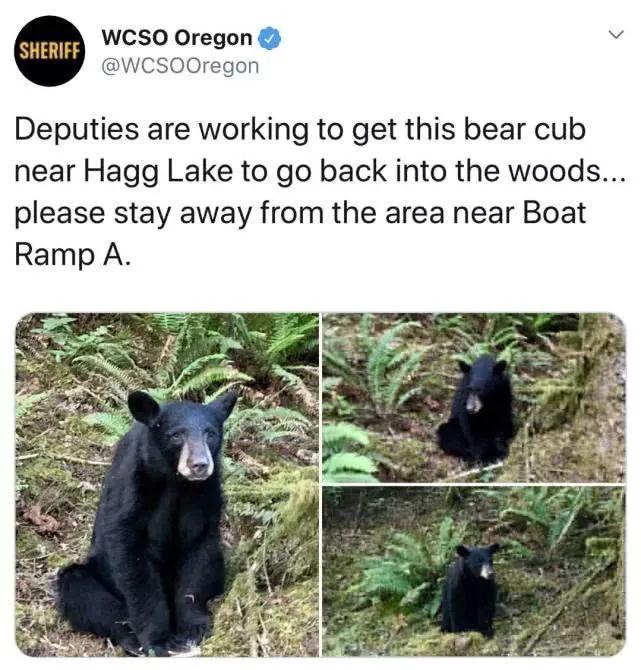 黑熊与人亲安乐死 游客的爱心害死了小熊