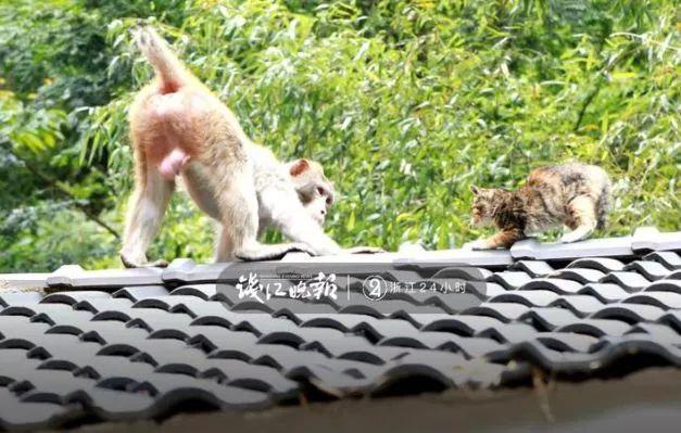 猴子多次打劫游客 不给东西就赖着不走了