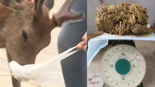 鹿因吞塑料袋惨死 当地呼吁游客要捡垃圾