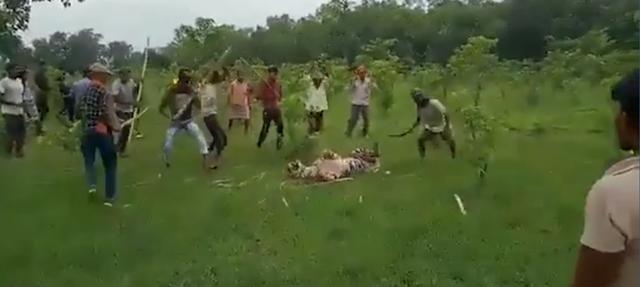 印度村民组团打虎 人虎大战没有胜利者