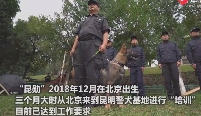 """首只警用克隆犬完成了""""上崗培訓"""" 正式入警"""