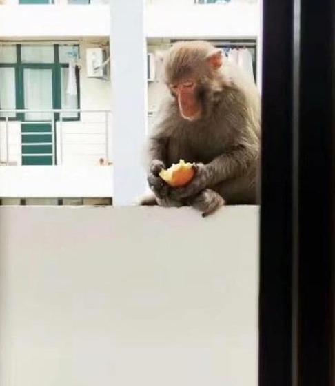 回校后宿舍进了只猴子